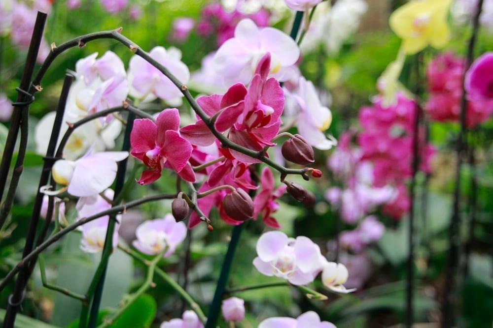 """""""Utopia"""" Orchid Park"""